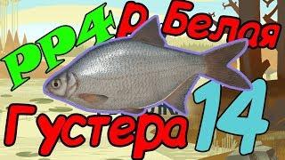 Русская рыбалка 4: СЕКРЕТНОЕ МЕСТО ТРОФЕЙНОЙ ГУСТЕРЫ (р. Белая)