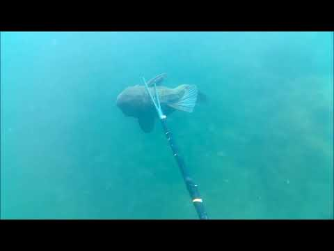 Guadalupe River SPEARFISHING Texas Hill Country - New Braunfels