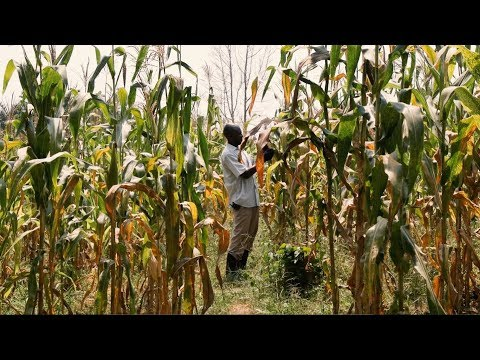 Cloud Computing Helps Uganda Grow Its Agricultural Sector and Middle Class