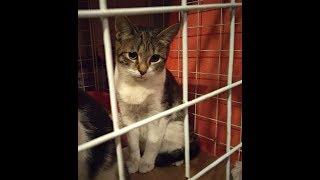 Сос.  котята Манюня и Крепыш ищут ДОМ! Их выкинули котят на мороз.  Петербург.