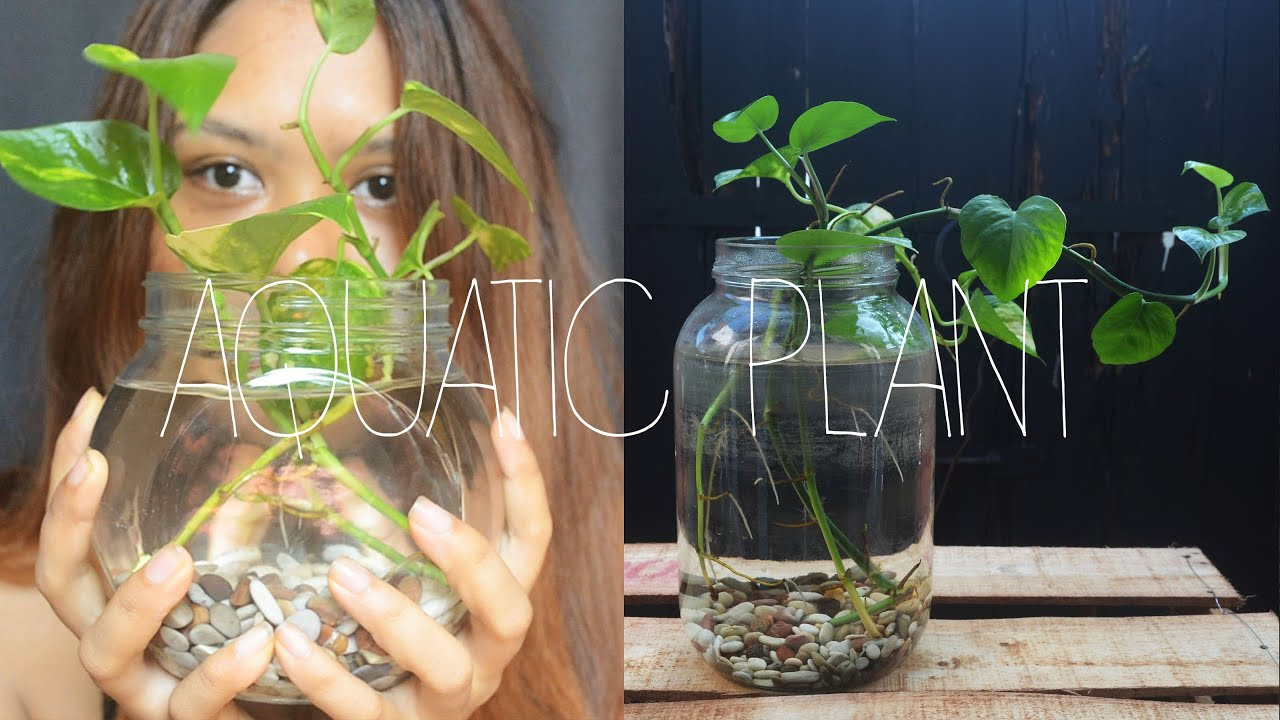 Diy home decor aquatic indoor plant youtube for Plant decorations home