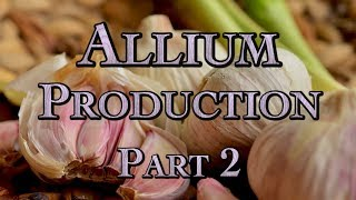 Allium Production Part 2