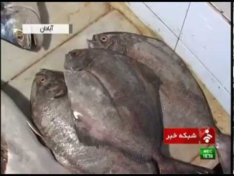 Iran beginning of fishing season in Persian Gulf آغاز فصل ماهيگيري در آبهاي خليج فارس آبادان ايران