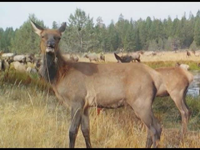 Rocky Mt Elk Foundation and Wildlife  - Buy American