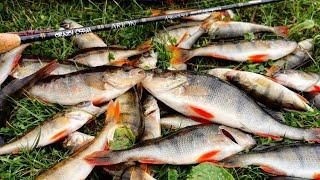 ТЕСТ НОВИНКИ CRAZY FISH ARION 692S SUL 2 06m 0 6 4gr Ловля окуня на ультралайт и микроджиг