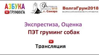 ВолгаГрум2018, Пэт груминг собак, экспертиза