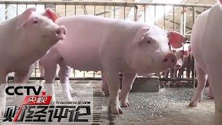 《央视财经评论》 20191217 生猪生产探底回升 猪肉供应逐步趋稳| CCTV财经