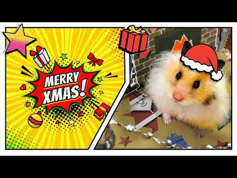 🎁🎅 Awesome 🎄 Christmas maze for cute 🐹 hamster with traps - 4 levels.