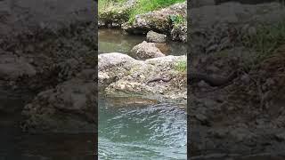 Yılanın balık avı(1)