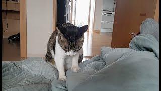 꾹꾹이 하면서 침 뚝뚝 흘리는 고양이