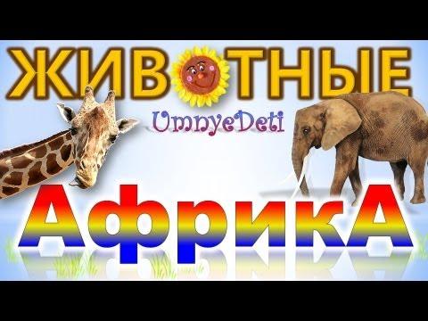 ОФИЦИАЛЬНЫЙ партнер ГУЛЛИВЕРА игрушек Bruder