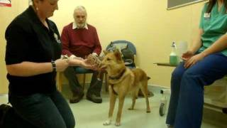 Drove Vets - Dog Behaviourist - Dog Handling Excercise