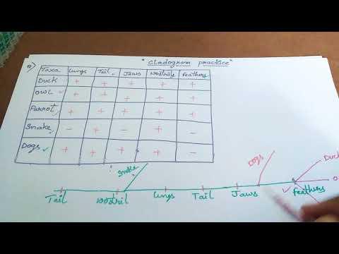 Cladogram Practice For CSIR Lifesciene Exam