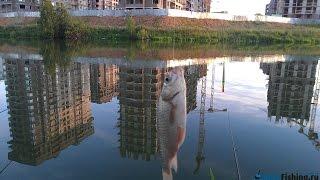 Ловля карася на реке Сетунька в Солнцево.  Рыбалка рядом с ДСК-3 и ЖК Татьянин Парк