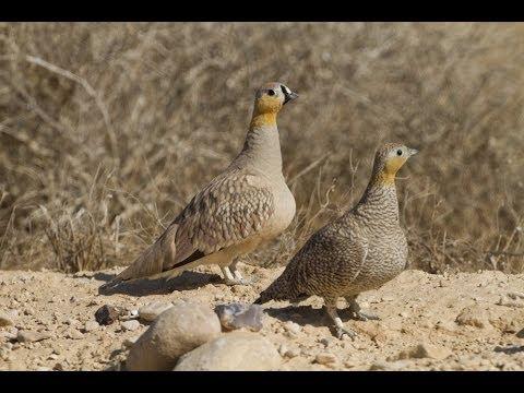 ציפורים במדבר יהודה