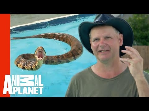 Thumbnail: Face-to-Face with a Cottonmouth Snake