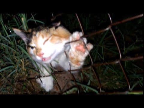 7 unbelievable animal rescues