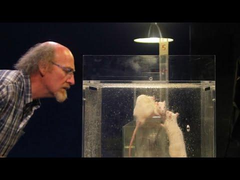 Вопрос: Эксперименты над животными в школе. Как вы относитесь?