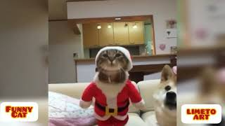 Funny Cat Video Compilation