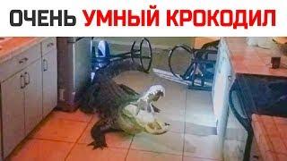 Умный Аллигатор выбил окно и залез в дом: Никто не ожидал