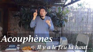 """Jus inflammation cérébrale, acouphènes : il y a le feu """"là-haut""""... - www.regenere.org"""