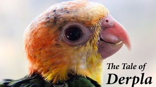 THE TALE OF DERPLA - The Parrot that refused to die
