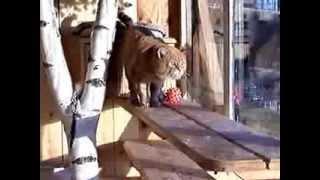 Зоогостиница «Лесси» 1998-2004г. Гостиница для собак, кошек и других домашних животных