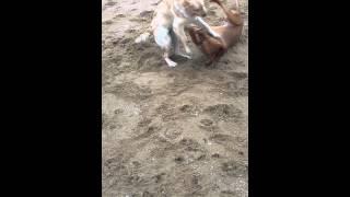 Ruby, Taro And Barney Go Crazy On The Beach