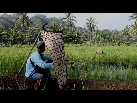 """Cover Lagu Feature alat musik tradisional Bundengan """"Musik dalam Tempurung"""" (dokumenter pendek) STAFABAND"""