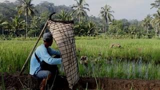 """Feature alat musik tradisional Bundengan """"Musik dalam Tempurung"""" (dokumenter pendek) - Stafaband"""