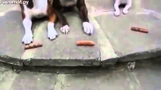 смотреть смешное видео про животных в хорошем качестве