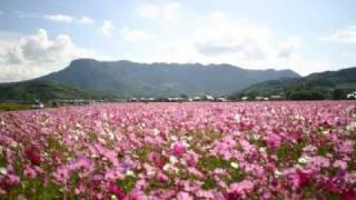中津の風景