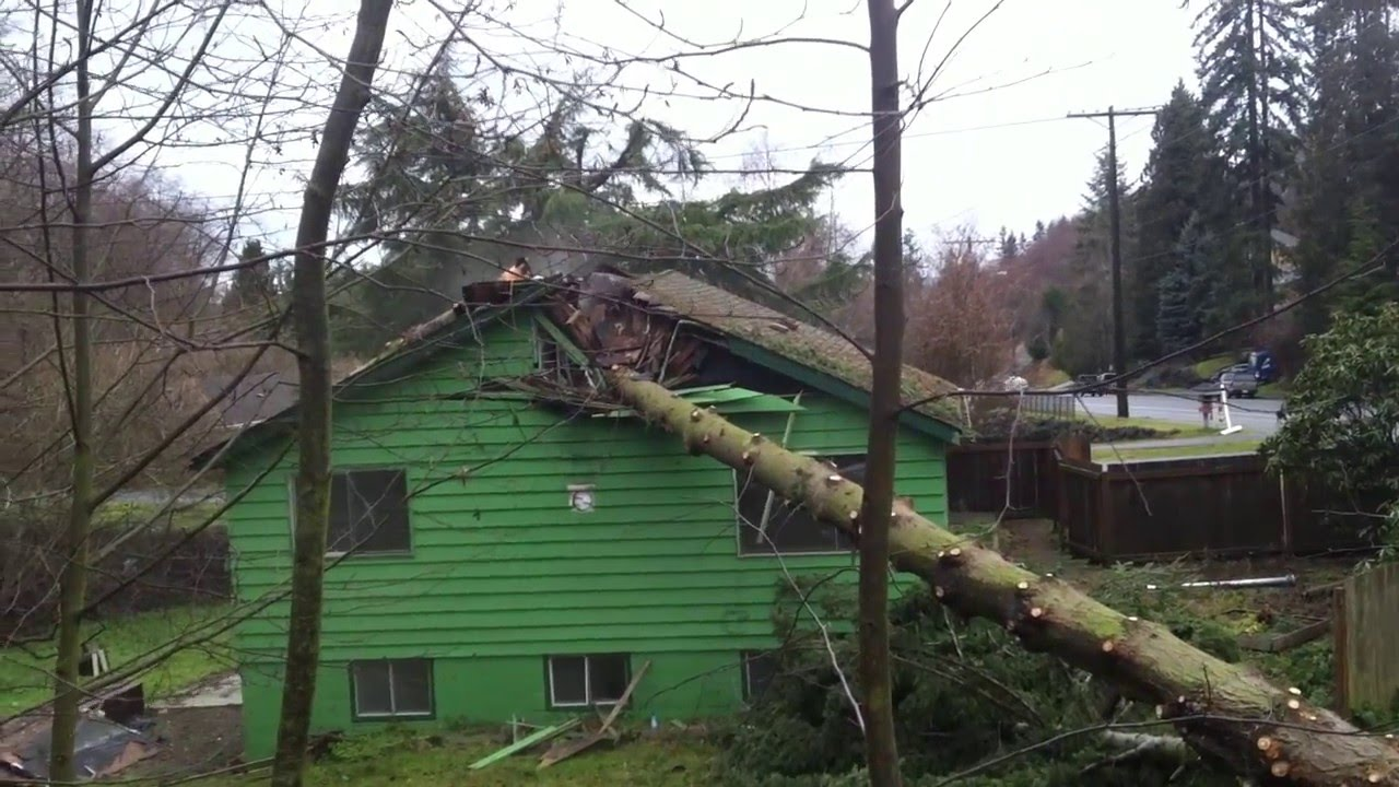 Tree Falling On The House Youtube