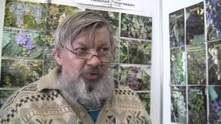 Выращивание винограда в условиях северных широт(Сергеев Николай Георгиевич из Южноуральска рассказывает о посадке, выращивании, уходе за северным виногра..., 2013-02-16T21:42:04.000Z)