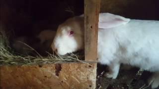Кроличья ферма. Продолжение.Подготовка к весне.