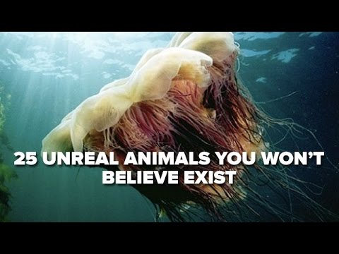 25 Unreal Animals You Won t Believe Exist YouTube