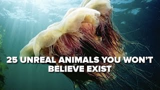 25 Unreal Animals You Won't Believe Exist