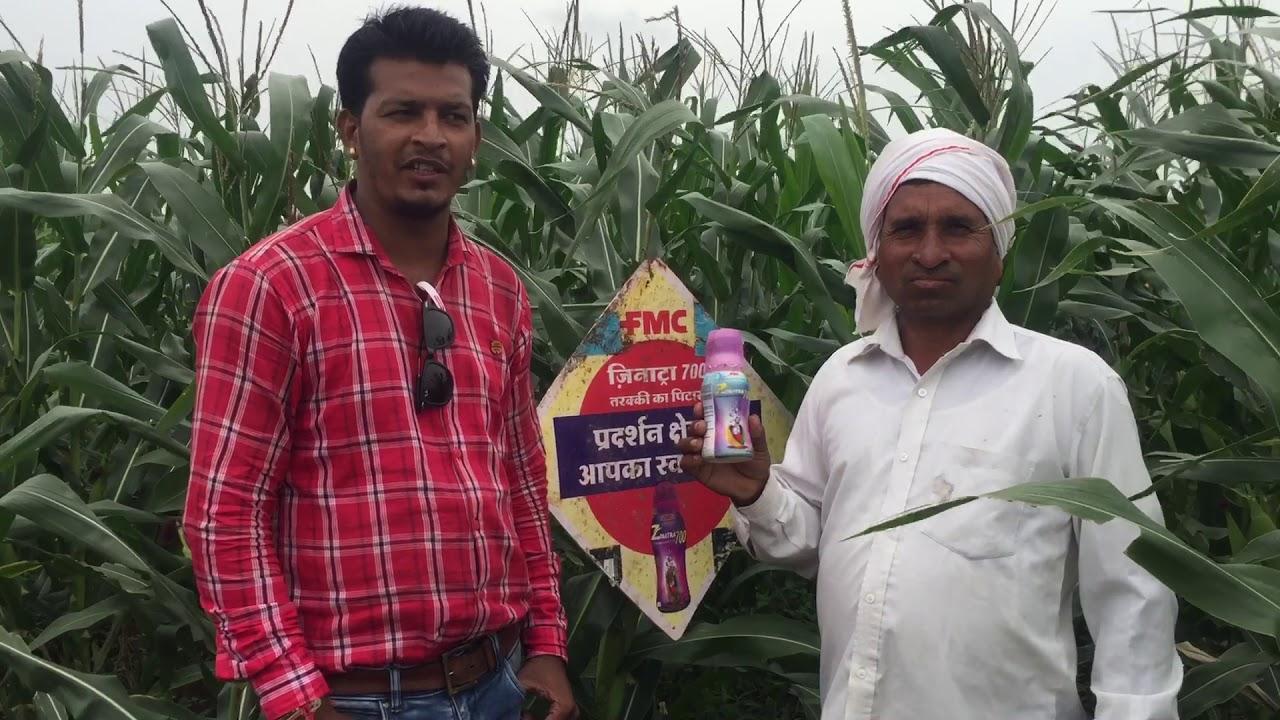 FMC India pvt ltd zinatra 700 (zinc 39 5%) super result for maize crop