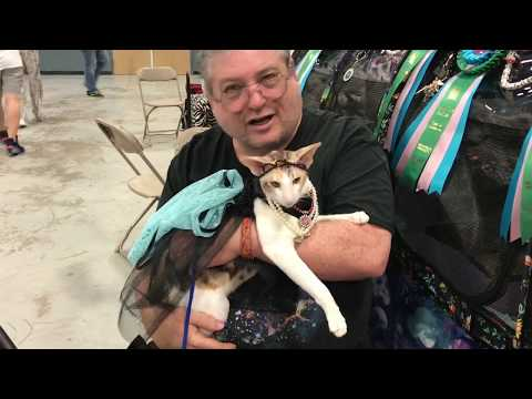 2019 Garden State Cat Show and Expo