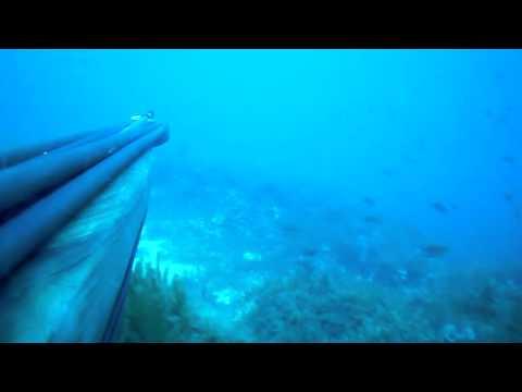 spearfishing 10 kg dentex
