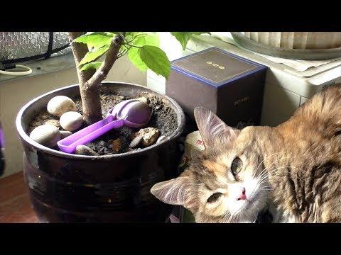 Как защитить цветочный горшок от кошки. Лайфхак №18