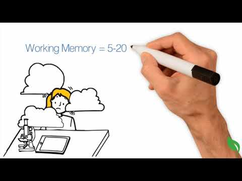 How Does Human Memory Work?