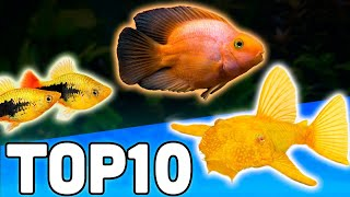 Top 10 Petsmart Fish
