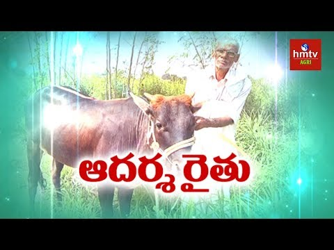 Natural Farming   Farmer Manohara Chary Shares Natural Farming Advantages   hmtv Agri