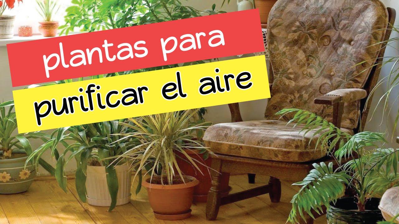 10 Plantas De Interior Que Limpiar N El Aire De Tu Casa