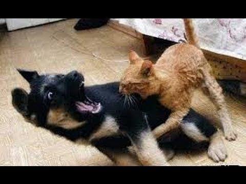 Pisici Și Câini Lupta Pentru Paturi Si Canapea - Amuzant Compilatie Animale