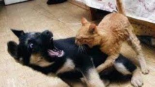 Pisici ?i Câini Lupta Pentru Paturi Si Canapea - Amuzant Compilatie Animale