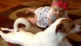 Dogs Taking Care Of Babies