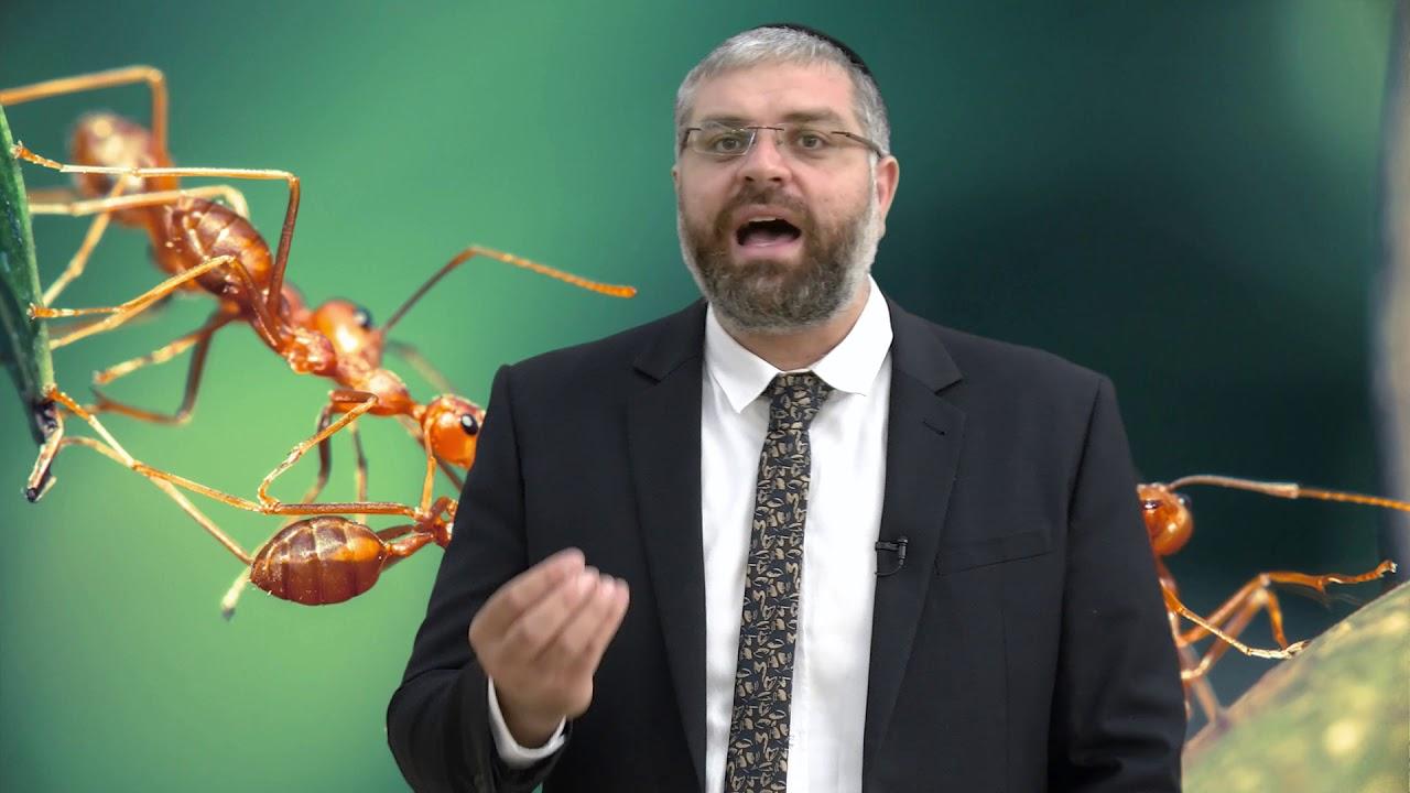 הרב מיכאל כהן - עצלן או חסר אמונה? HD