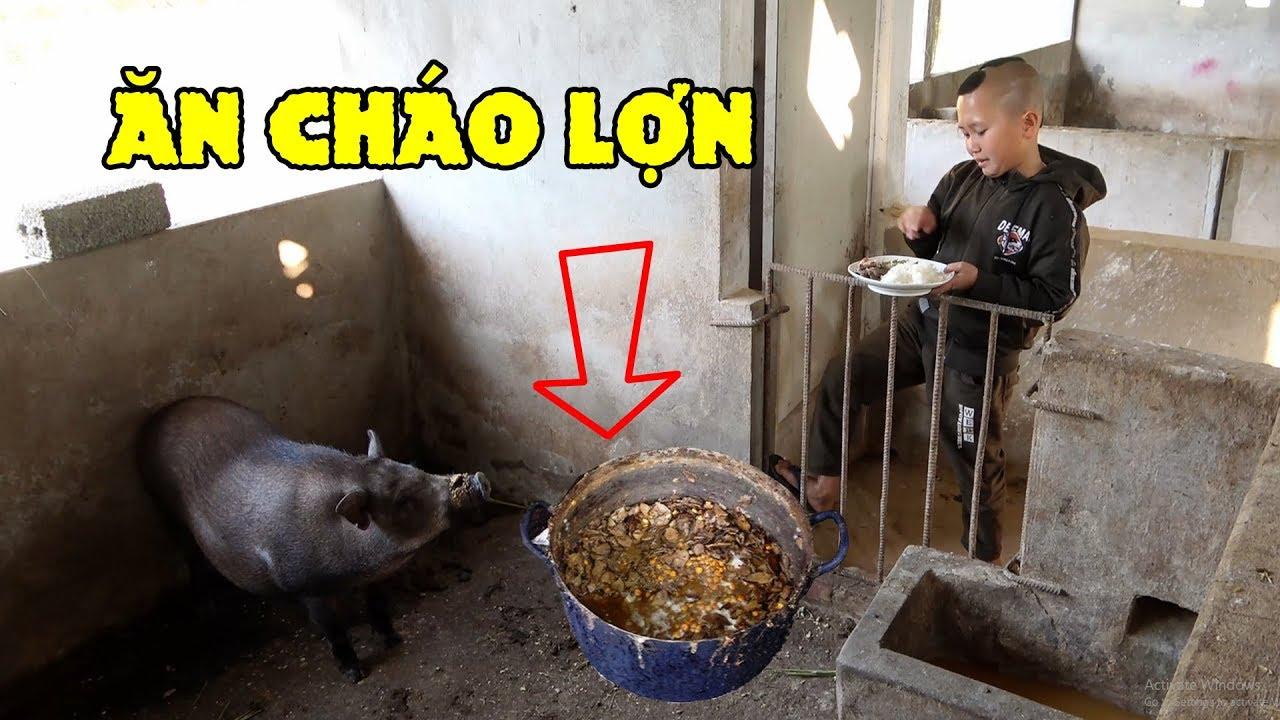Ăn Cháo Lợn – Mao Đệ Đổi Thức Ăn Cho Lợn Để Được Béo Như Lợn